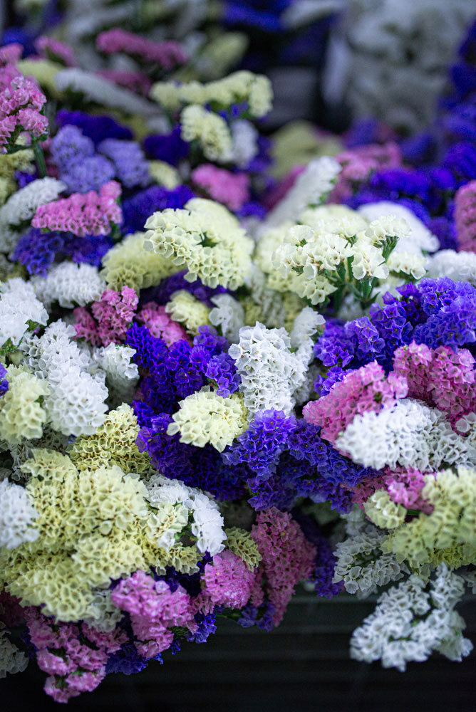 MAzzo fiori variopinto