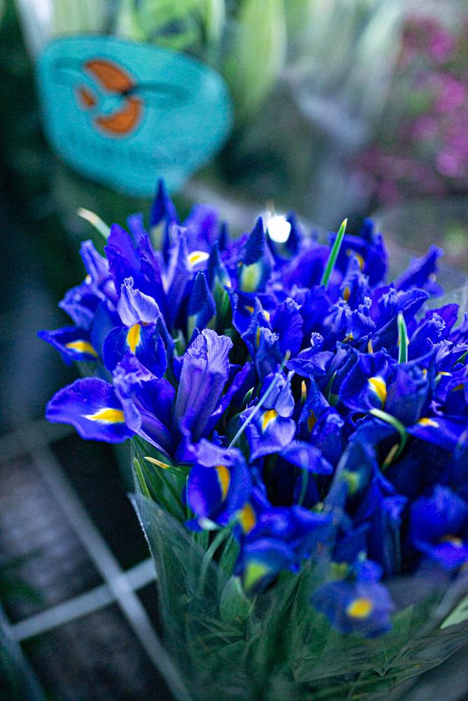 Particolare fiori blu
