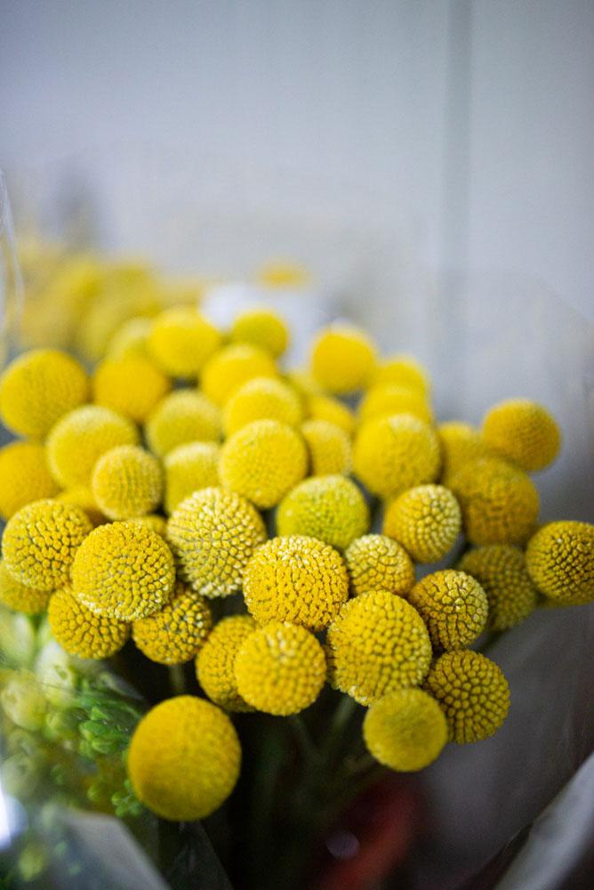 Vendita ingrosso fiori recisi gialli